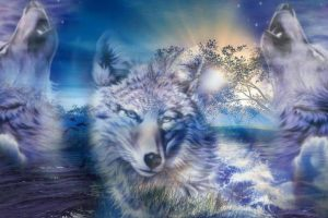 wolf wallpapers hd 4k 57