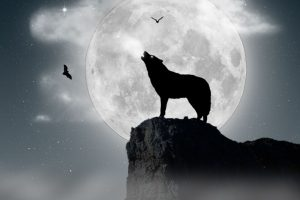 wolf wallpapers hd 4k 59