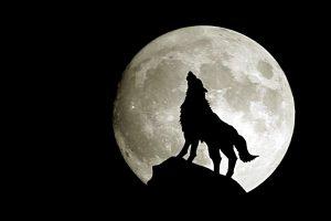 wolf wallpapers hd 4k 6